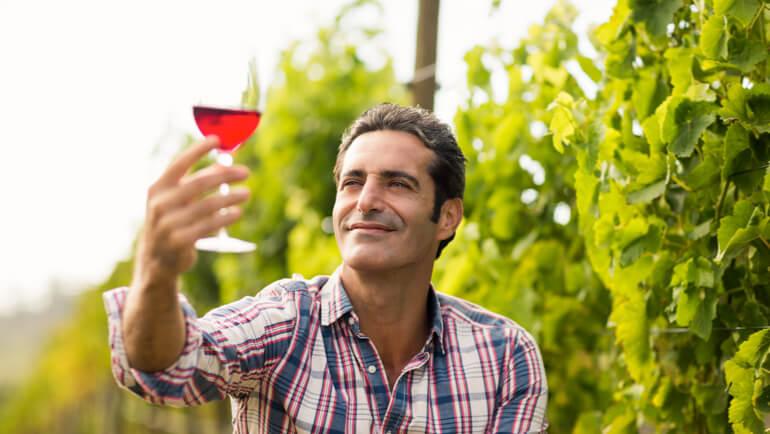 Wijn maken: het volledige proces